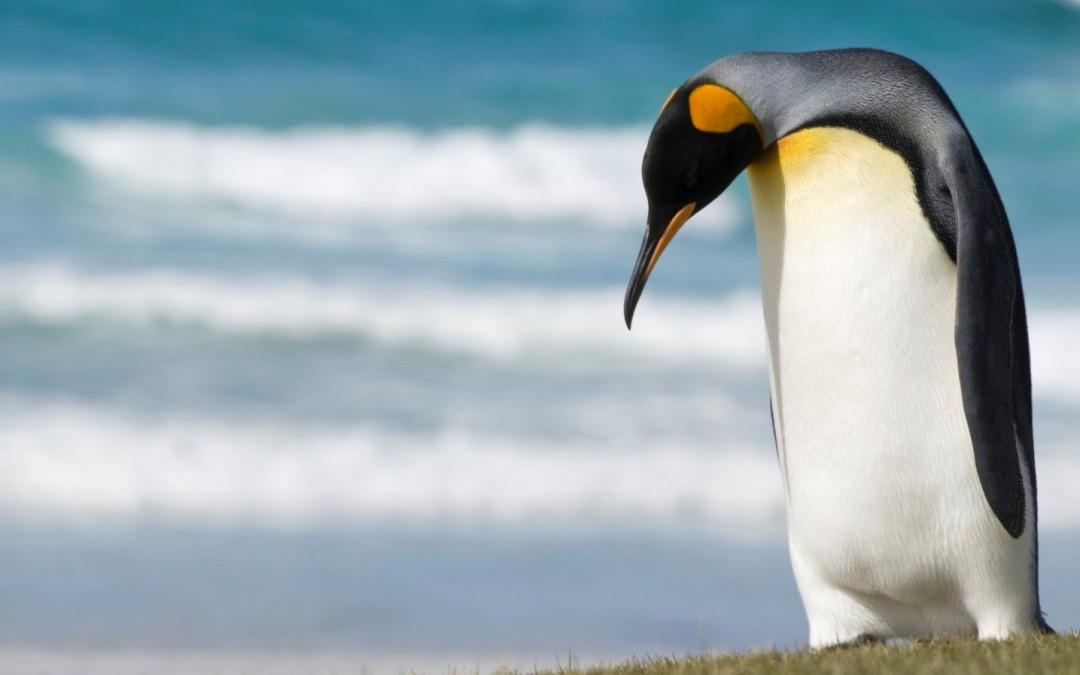 Pingvin uz ćebe